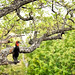 Ground Hornbill in a Tree by Jeff Clow