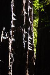 Redwood Webs