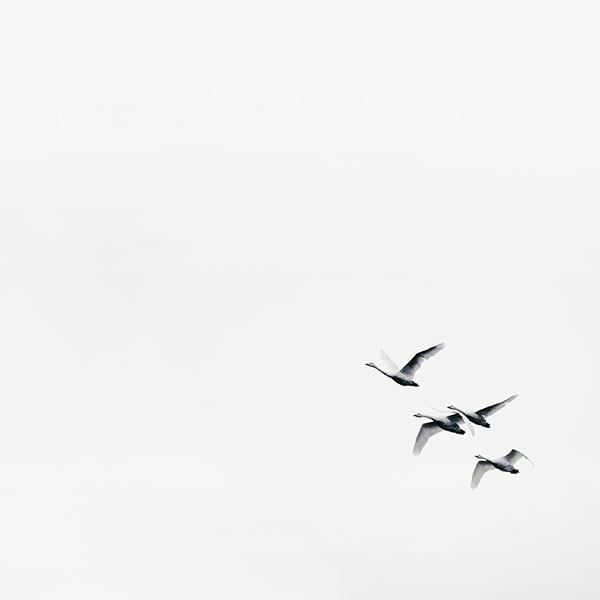 swanrise