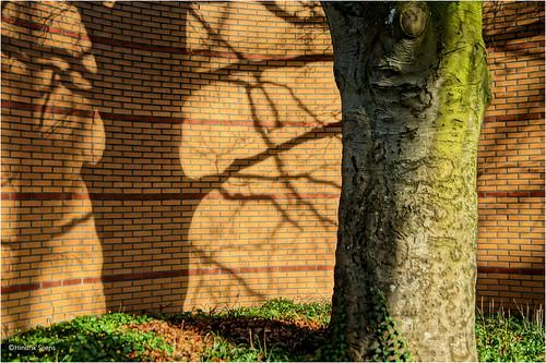 Jagged Shadows