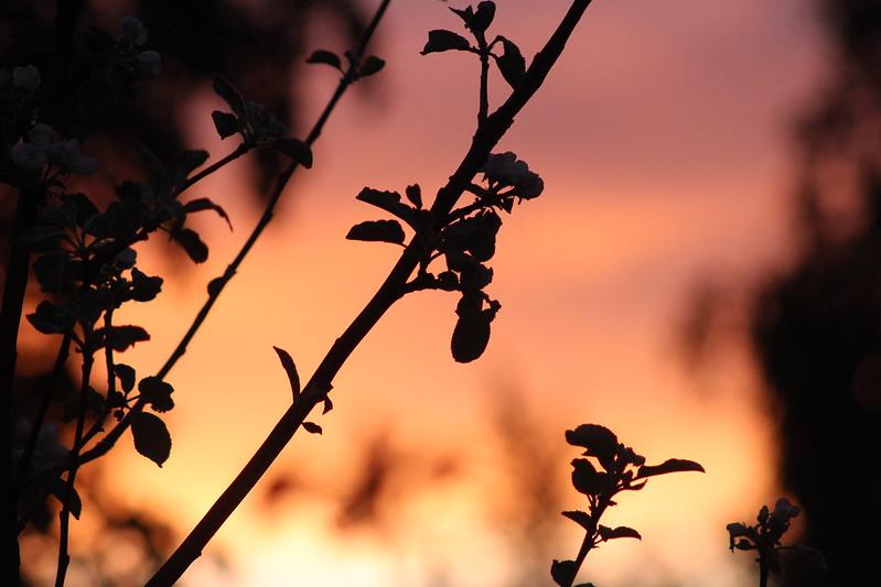 kiran piknik ja sunset 076