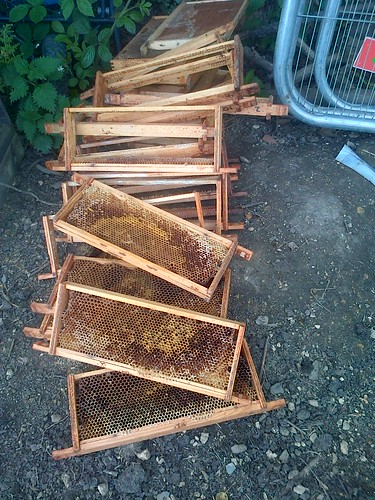 hive frames June 13