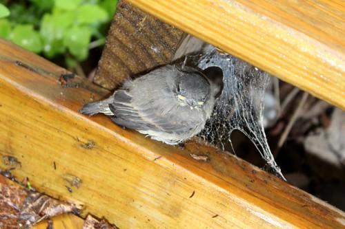 Birdies-5
