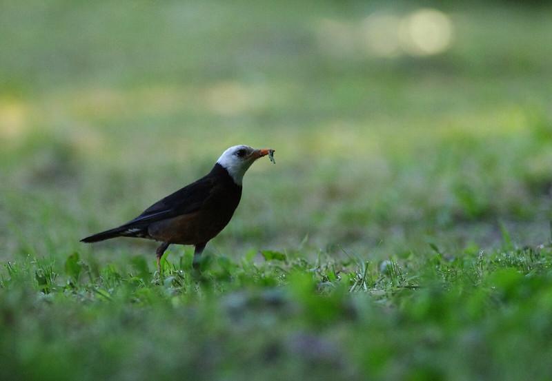 溪頭賞鳥去