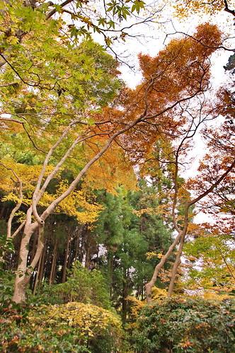 【写真】2012 紅葉 : 祇王寺/2021-09-05/IMGP7869