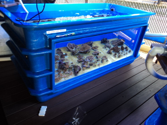 Plywood tank help reef central online community for Plywood fish tank