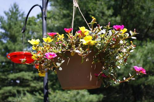 [98/365] Summer Blooms