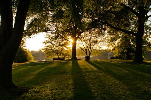 trees shadow summer sunrise shadows massachusetts newengland wakefield lakequannapowitt