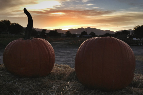 Twilight pumpkins Salt Lake City farm