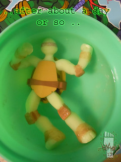 WICKED COOL TOYS :: Nickelodeon TEENAGE MUTANT NINJA TURTLES; 'WATER GROW TURTLES' - DONATELLO x // ..after about a day  (( 2013 ))