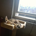 Small photo of Ganymede the kitten, Bushwick, Brooklyn