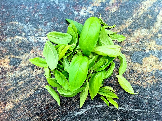 Large Handful of Fresh Basil