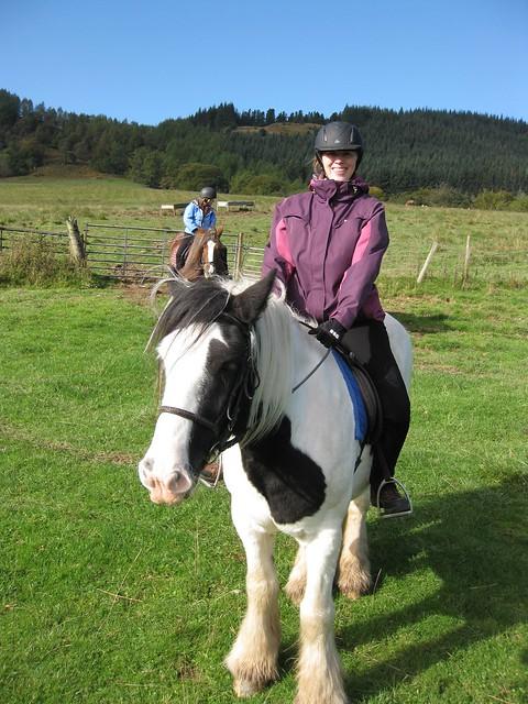 Sam the Gypsy horse