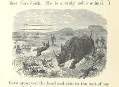 Image taken from page 224 of '[African Hunting from Natal to the Zambesi including Lake Ngami, the Kalahari Desert, &c. from 1852 to 1860 ... With illustrations [including a portrait] by James Wolf and J. B. Zwecker.]'