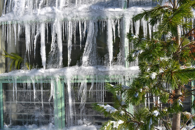 Icicles on the Conservatory. Photo by Dana Miller.