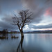 Ullswater Tree by Buckles Photos