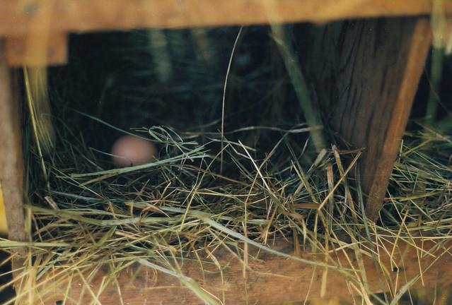 eggs are sort of amazing.