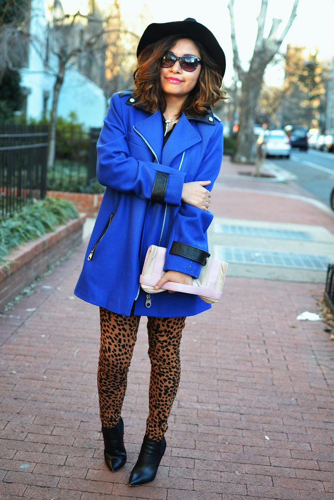 Spicy Candy DC. Cobalt blue coat, leopard print  trousers 024