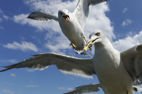 Flying Get!! by 濱田 晃弘 (Akihiro Hamada)