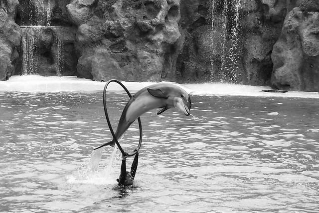 P3081520_delfin