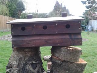 Sparrow box 6