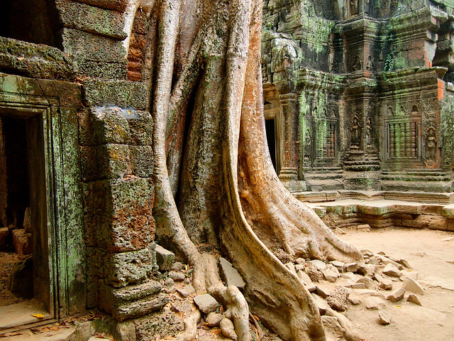 Ta Prohm temple in Angkor, Cambodia