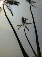 Hawaii-1747