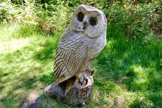 Header of ollie wood