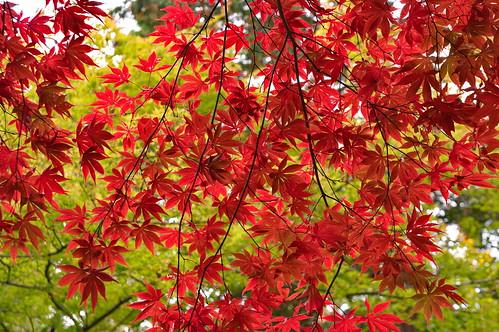 【写真】紅葉 : 今熊野観音寺