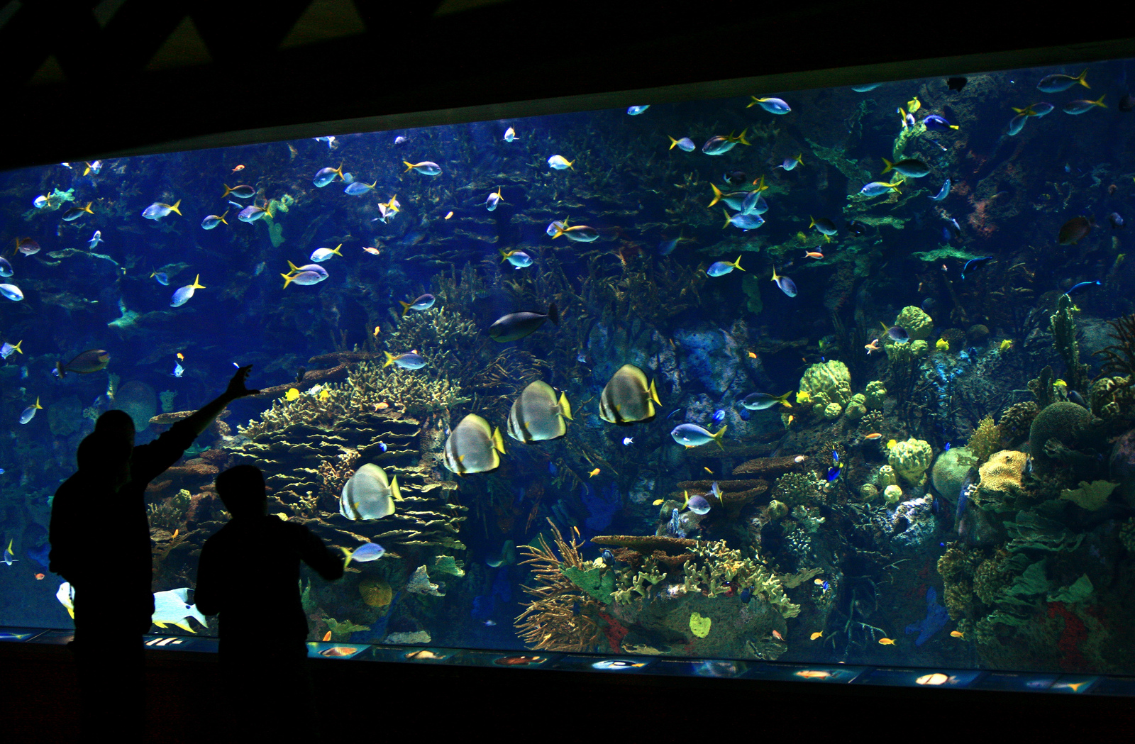 Acuario de especies tropicales en el Oceanogràfic. Autor, Ciudad de las Artes y las Ciencias