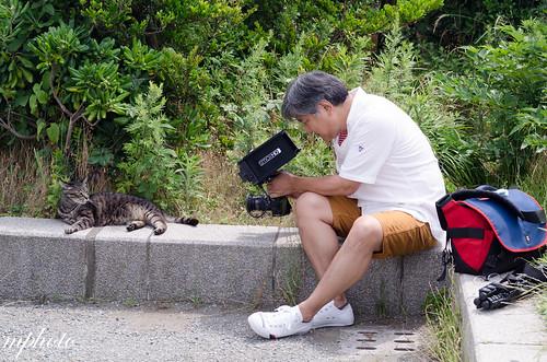 江之島 貓咪
