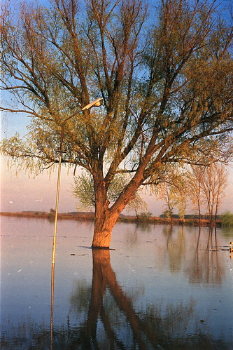 light sunset reflection tree film water 35mm river spring flood streetlamp grain analogue minoltasrt101 goldenhour tisa