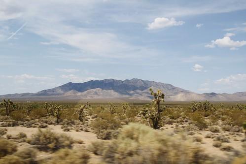 Mojave National Preserve 2013