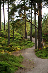 Glencharnoch Wood, Carrbridge
