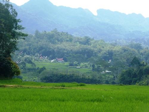 Sulawesi13-Makale-Rantepoao (42)