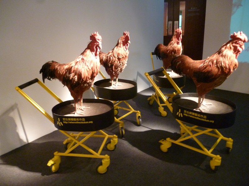 Chickens at the Hong Kong Museum of Art