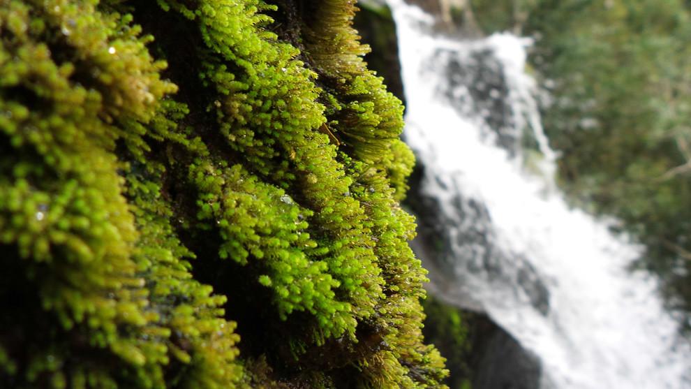 El musgo crece entre las rocas de una de los tantas caídas de agua del Salto Cristal, que es uno de los saltos más grandes con casi 70 metros de altura. (Tetsu Espósito).