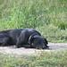 time for a nap por Bolt of Blue