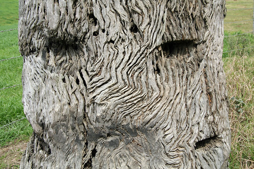 20130822_0846 face in a tree trunk at Waitui
