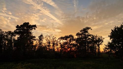 trees sunset louisiana neworleans barataria