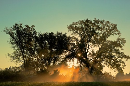 park morning trees light sun color fog sunrise landscape gold mood kentucky ky space valley gradient environment fishermans louisville tone hdr gentle daybreak fishermanspark 500px ifttt