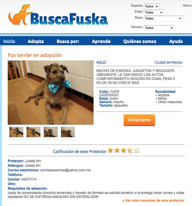 Milo en BuscaFuska