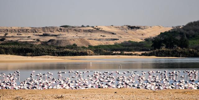 Al Wathba Reserve