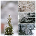 Ice Storm 2013 Quadtych