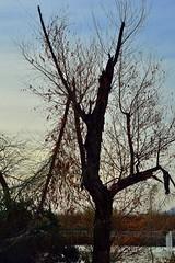 Tree Bones #3