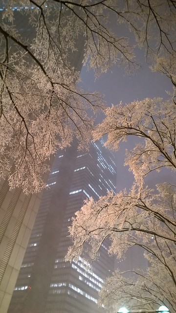 Sky scrapers with white trees
