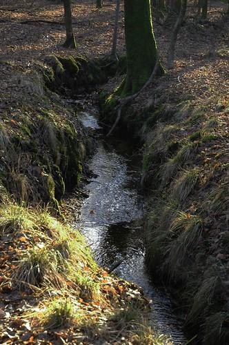 Bachlauf in den Staatsforsten in Ostenfeld, Nordfriesland (20)