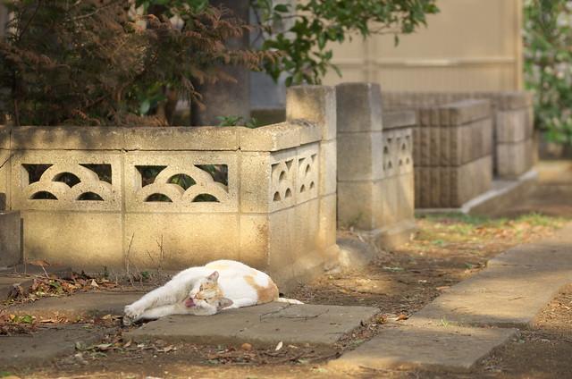 東京路地裏散歩 谷中編 ネコ 2014年3月12日