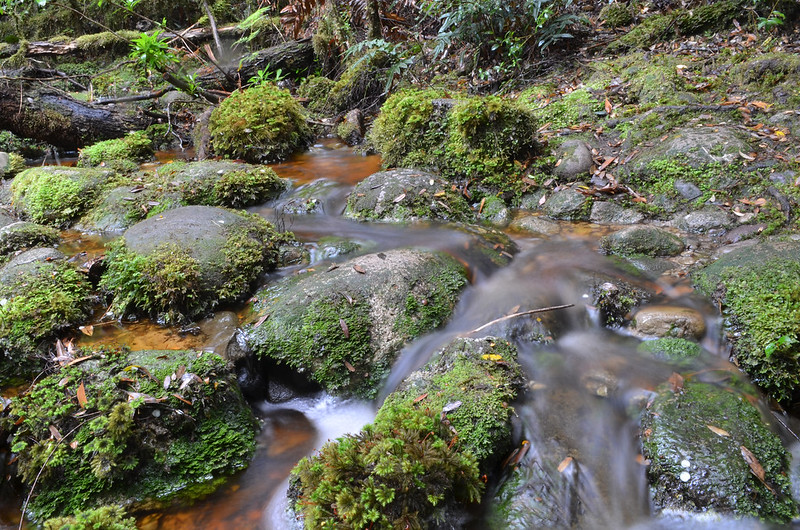 A creek on the Whyte River Walk - Tarkine Wilderness - Corinna - Tasmania