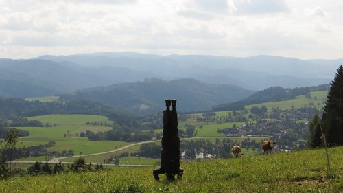 69. black forest headstand